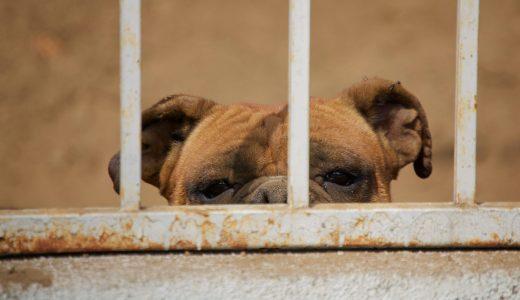 トリマーが知っておくべき取扱注意とされる犬種とは?