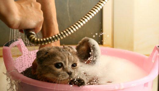 猫のトリミングで麻酔を使うって本当?これまでとは違う猫のトリミング事情とは?