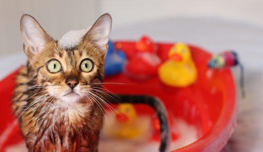 猫トリマーの需要が拡大中!【どんなお仕事?就職できる?】