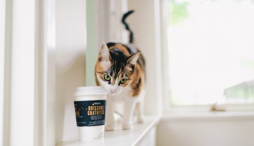 猫には猫専用シャンプーを使うべき?猫専門商品が続々誕生中!