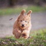 入学直前の不安を一気に解消!犬の触り方から学ぶ専門学校生活を解説