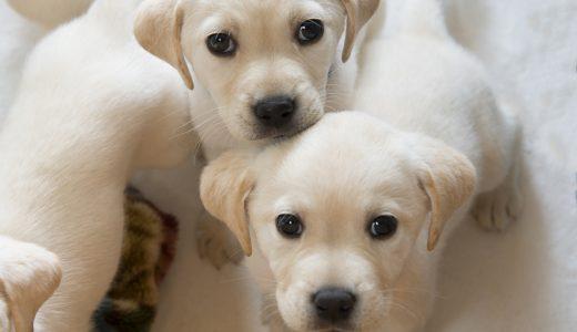 【動物愛護法改正】2021年6月に改正された内容の一部をご紹介