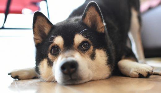 シニア犬は何歳まで受け入れる?安全にトリミングを行うために必要なこと